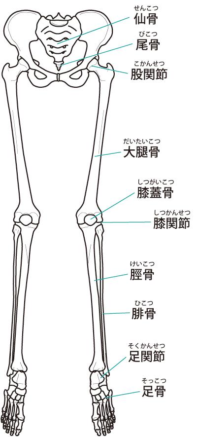 下肢の関節や踵の歪みを整えることで踵の痛みを早期改善に導きます。