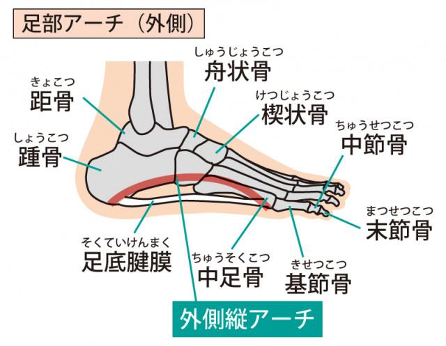 足のアーチの少なさがモートン病の原因になります。